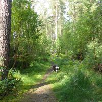 Woodland dog walk with swimming, Northumberland - Northumberland dog walking places.jpg