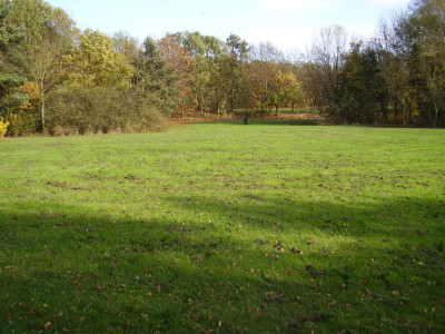Leamington dog walks and dog-friendly pub, Warwickshire - Driving with Dogs