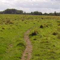 Lammas Meadows dog walk, Cambridgeshire