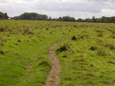 Lammas Meadows dog walk, Cambridgeshire - Driving with Dogs