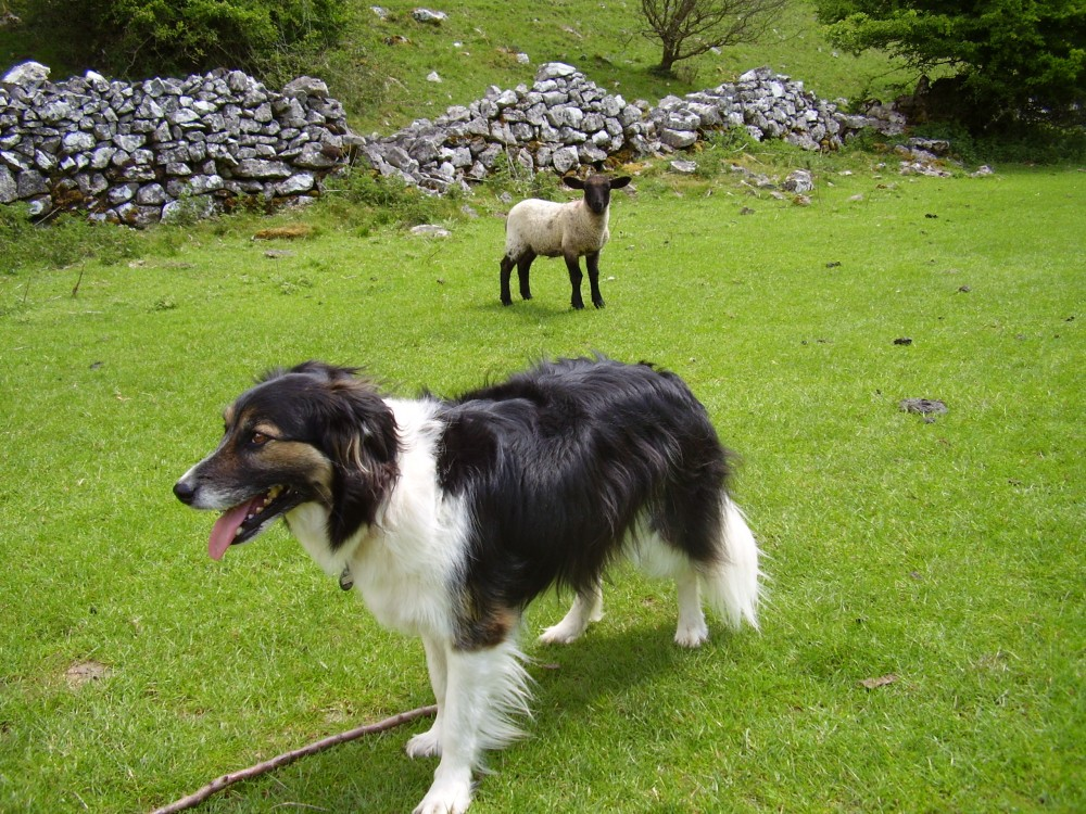 White Peak dog-friendly pub and short dog walk, Derbyshire - Peak District dog-friendly pub and dog walk