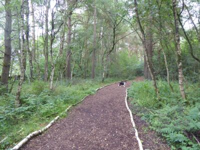 A66 Woodland dog walk and nature reserve, Cumbria - Driving with Dogs