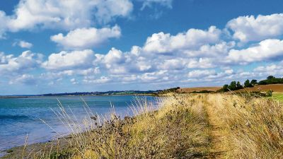 Riverside dog walks and dog-friendly pubs, Essex - Driving with Dogs