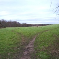 A512 dog walk and dog-friendly pub near Coalville, Leicestershire - Dog walks in Leicestershire
