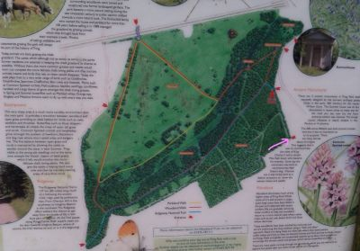 Wigginton Wood Dog Walk - includes part of The Ridgeway, Hertfordshire - Driving with Dogs