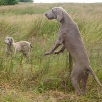 Grains Bar dog walk, Greater Manchester - Dog walks in Greater Manchester