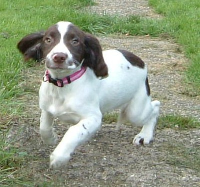 Waggy Tails dog walking service, Kent - Driving with Dogs