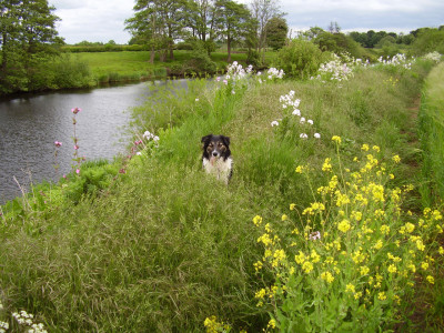 A44 riverside dog walk, Worcestershire - Driving with Dogs