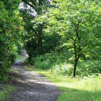 M180 Junction 4 Woodland dog walk and nearby dog-friendly pub, Lincolnshire - Dog walks in Lincolnshire