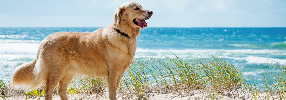 dog-friendly-guernsey1.jpg