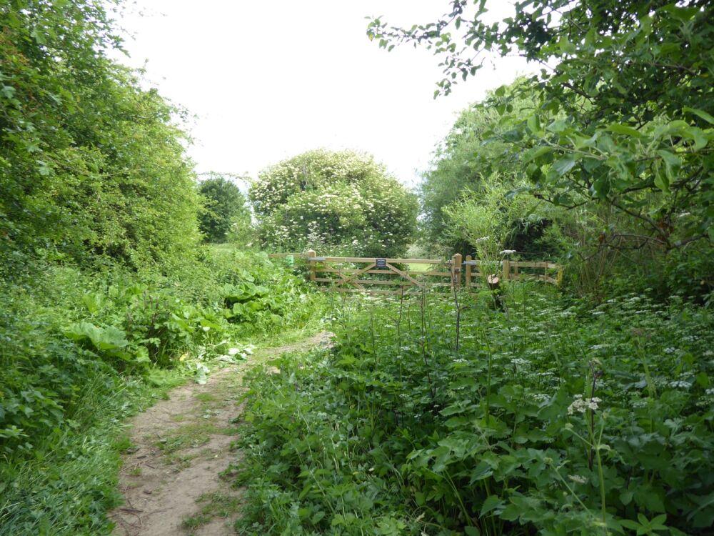Picnic Area and historic Toll Bridge, North Yorkshire - Yorkshire dog walks