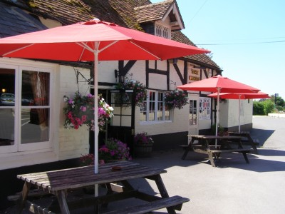 Woodland walk and dog-friendly pub near Romsey, Hampshire - Driving with Dogs