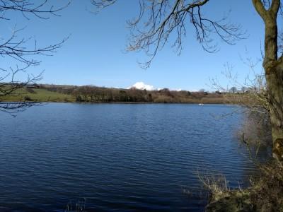Rudyard Reservoir dog walk, near Leek, Staffordshire - Driving with Dogs