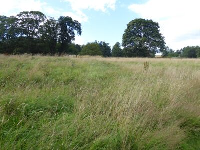 A Roman walk with the dog, Northumberland - Driving with Dogs
