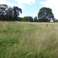 A Roman walk with the dog, Northumberland - Northumberland dog walking places.jpg