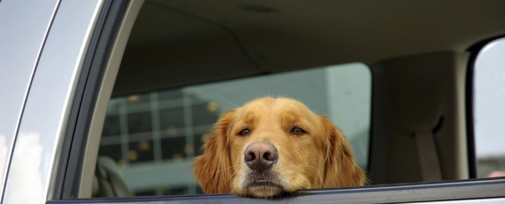 train your puppy to love the car.jpg