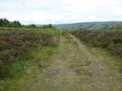 A170 Moorland walk with the dog, North Yorkshire - Driving with Dogs