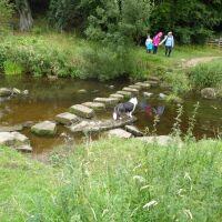 A696 riverside dog walk with cream tea, Northumberland