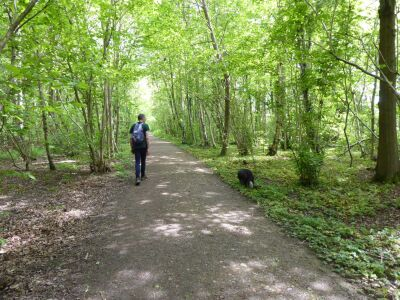 Woodland dog walk near Wragby, Lincolnshire - Driving with Dogs