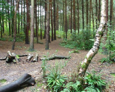 Woodlands dog walk near Horsham, West Sussex - Driving with Dogs