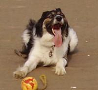 Barry Island dog walk - winter only, Glamorgan, Wales - Dog walks in Wales