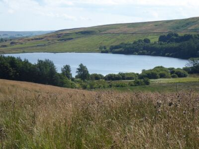 A689 remote nature ramble with the dog, Cumbria - Driving with Dogs