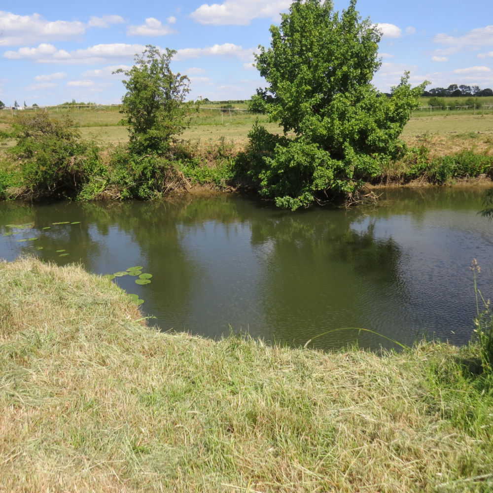 River Meadow Dog Walking Fields, Warwickshire - IMG_8183.JPG