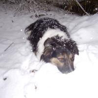 Colin Glen dog walk near Belfast, NI - Dog walks in Northern Ireland