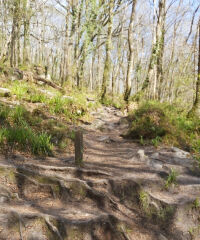 Golitha Falls National Nature Reserve, Cornwall - 20210427_153225.jpg