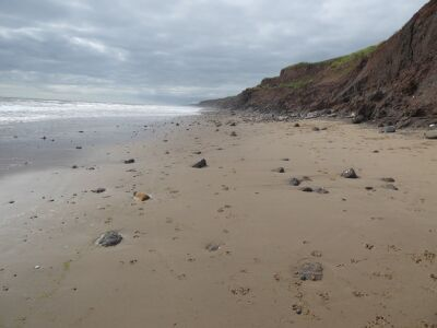 Mappleton dog-friendly beach, East Yorkshire - Driving with Dogs
