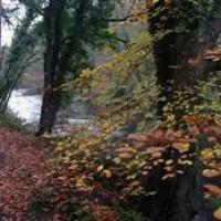 Gortnamoyagh Forest dog walk, NI - Dog walks in Northern Ireland