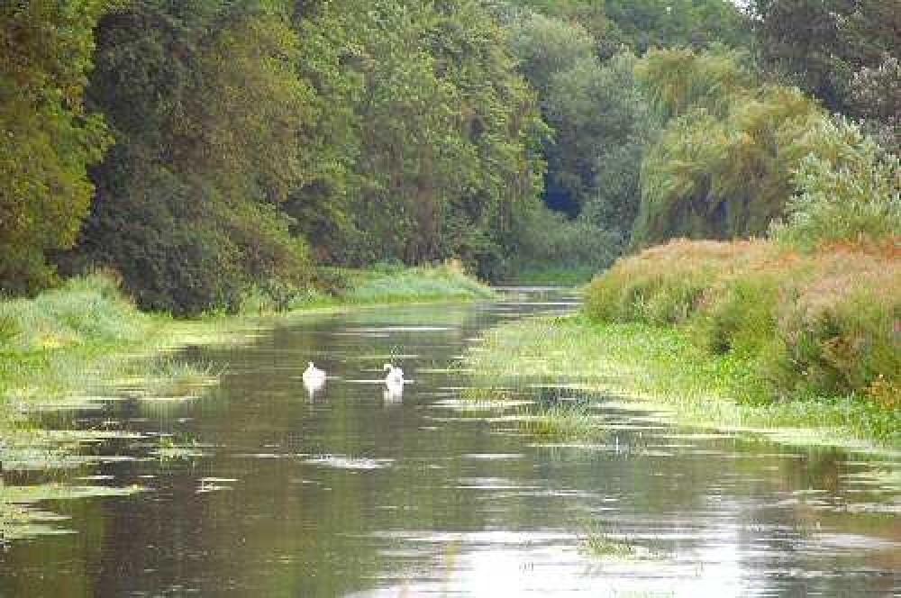 A5 dog walk and cafe near Shrewsbury, Shropshire - Dog walks in Shropshire