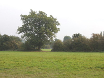 Bayhurst Wood, Greater London - Driving with Dogs
