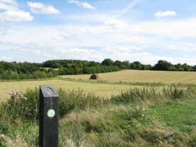 Fryent Country Park, Greater London - Driving with Dogs