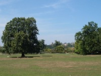 Mill Hill Park dog walks, Greater London - Driving with Dogs