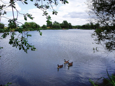 Eastbrookend Park dog walk, Greater London - Driving with Dogs