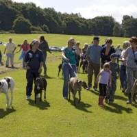 Hainault Forest dog walks, Essex - Dog walks in Essex