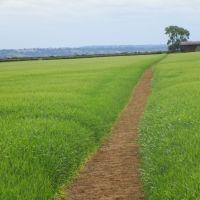 Dog-friendly pub and dog walk near Banbury, Warwickshire - Warwickshire dog-friendly pub and dog walk.JPG