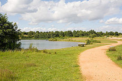 Lakeside Country Park dog walk, Hampshire - Driving with Dogs