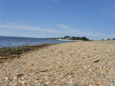 Country Park dog walk and dog-friendly beach, Hampshire - Driving with Dogs