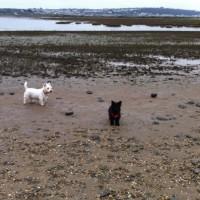 Dog Friendly Beach near Bideford, Devon - 457CBC74-F2C7-4884-BCD9-40D3D5728F25.jpeg