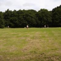 M6 Junction 10 dog walk, West Midlands