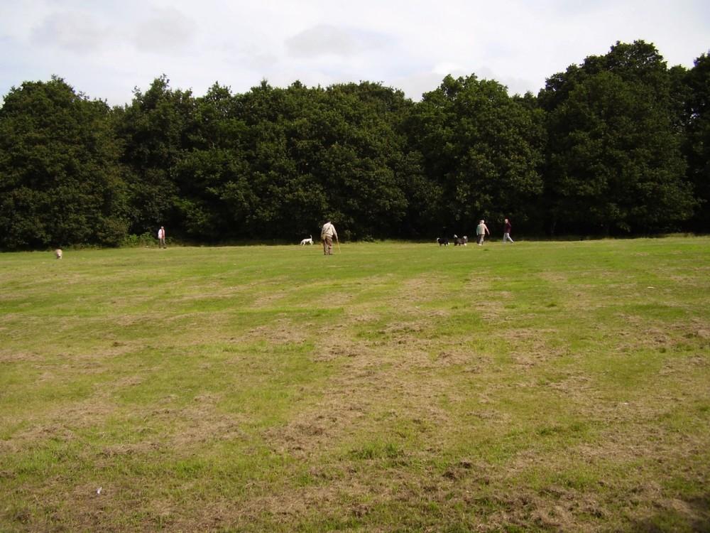 M6 Junction 10 dog walk, West Midlands - Dog walks in the West Midlands