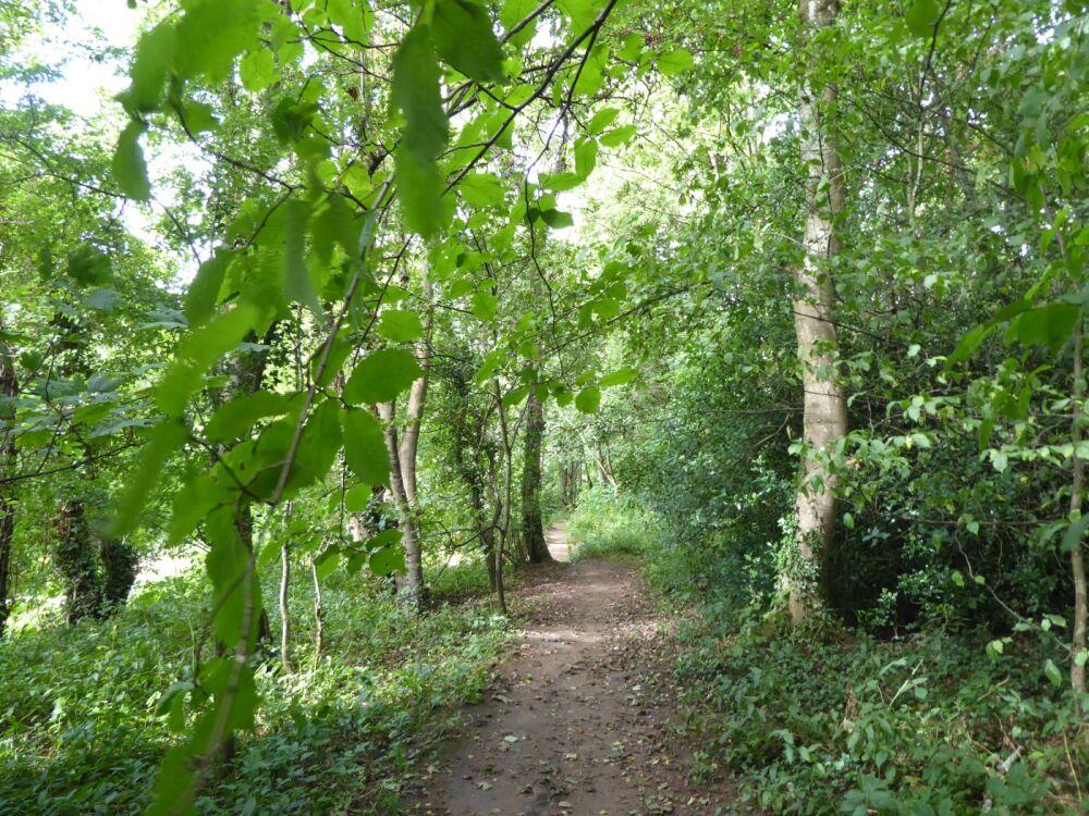 A595 Riverside dog walk and country inn, Cumbria - Cumbria dog-friendly pubs and dog walks.jpg