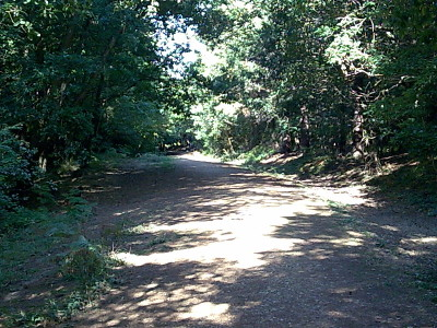 Firestone Copse dog walk, Isle of Wight - Driving with Dogs