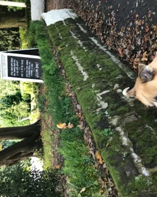 Dog-friendly pub and dog walk off the M6 Junction 20, Cheshire - Driving with Dogs