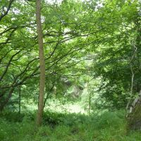 A690 Dog walk with full accessibility and no sheep, County Durham - Dog walks near Bishop Auckland