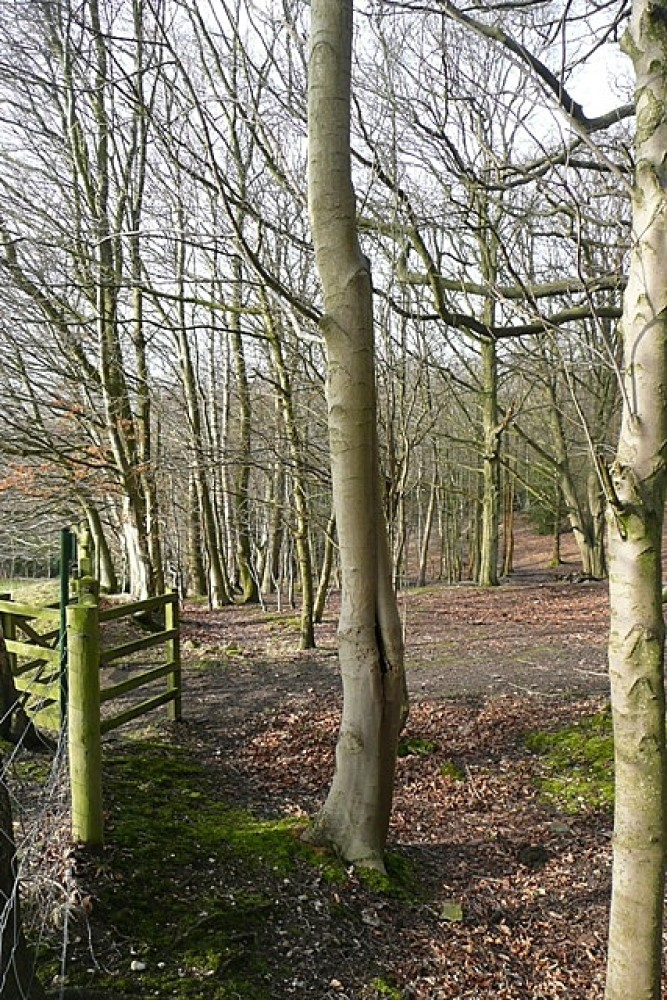 Commons dog walks, Berkshire - Berkshire dog walk