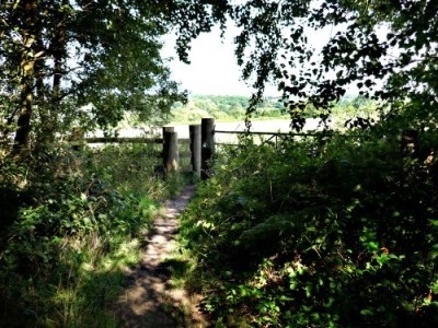 A444 Arley Woods dog walk, Warwickshire - Driving with Dogs