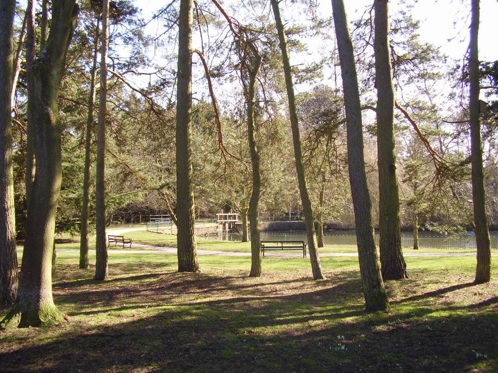 M42 Junction 5 dog walk and cafe near Solihull, West Midlands - Dog walks in the West Midlands